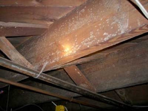 mold-in-crawlspaces2