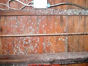mold-in-crawlspaces3