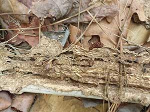 termites5